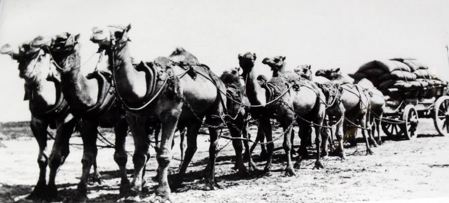 Namanbinia Station - Camel Train